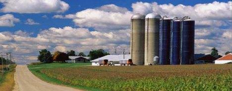 Life on a dairy farm